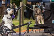 Die Showhunde sind wahre Rampensäue